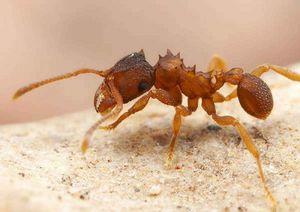 Как избавить квартиру от муравьев