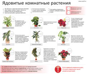 Цветы нельзя держать дома