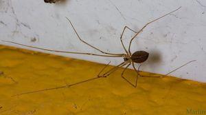 Любимое место пауков