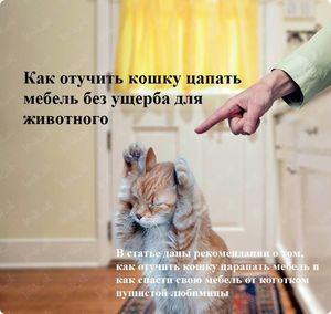 Способ приучить кота к когтеточке