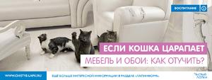 Царапается кот