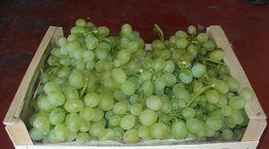 Как можно сохранить виноград свежим