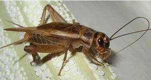 Как избавиться от насекомого