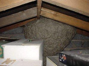 Как удалить осиное гнездо с чердака