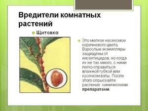 Лайфхак: борьба с вредителями растений