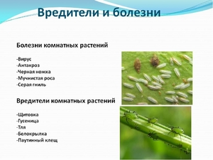 Почему заболевают комнатные растения