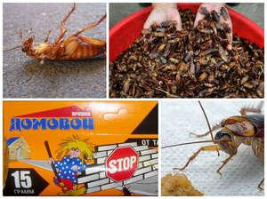 Применение средств от тараканов