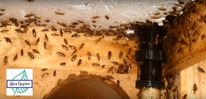Чем вывести тараканы
