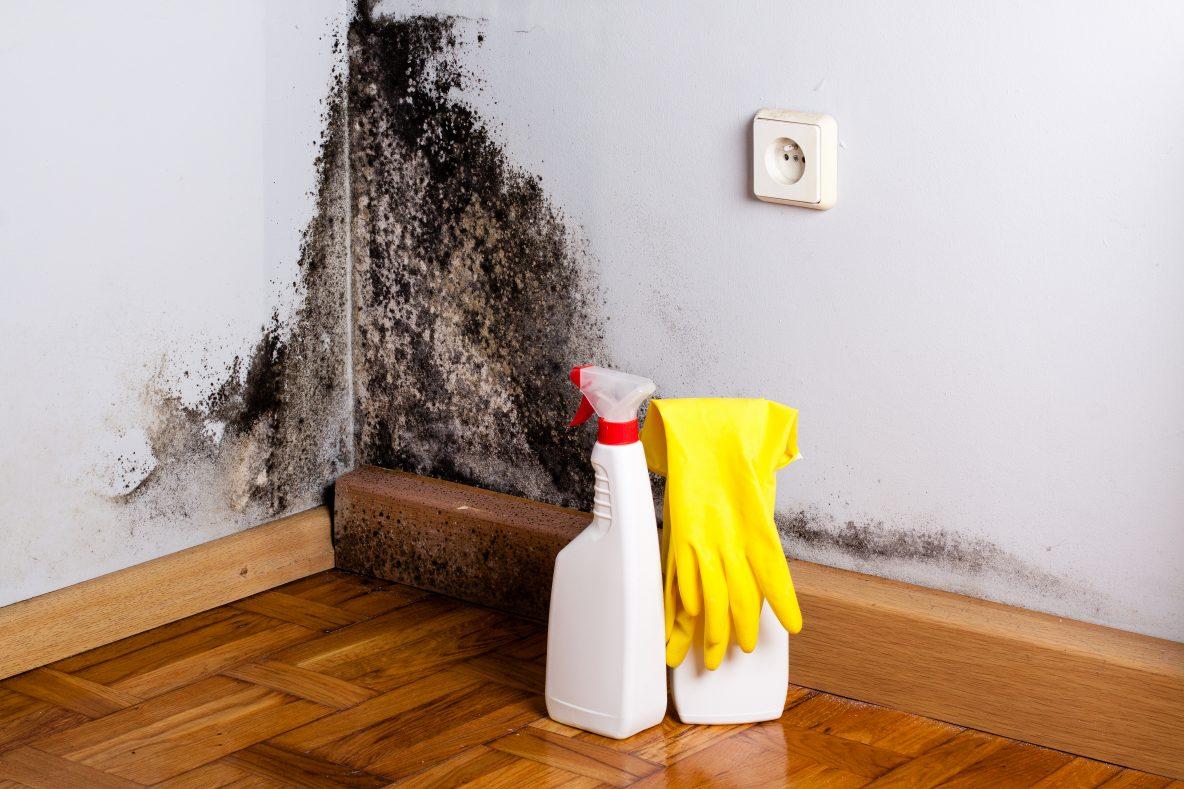 Как вывести плесень на стенах 17